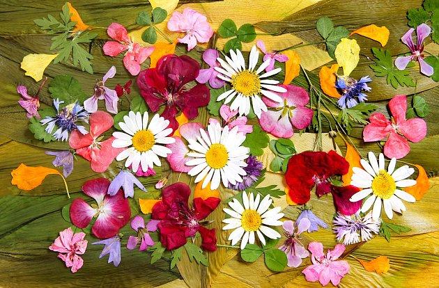 Lisujeme květiny, abychom si uchovali vzpomínku na léto.