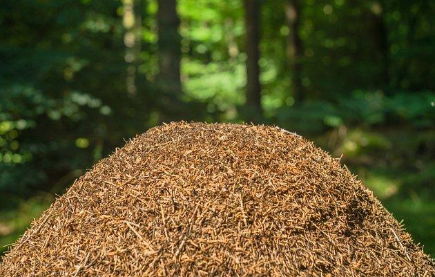 Pokud sodu nasypete na mraveniště, s největší pravděpodobností se nic nestane