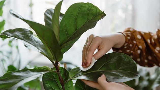 Kdo by nechtěl mít doma krásné, zelené, zdravé a bujně rostoucí pokojové rostliny?