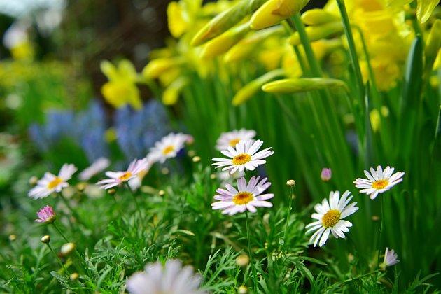 Hnojení podpoří bohaté kvetení
