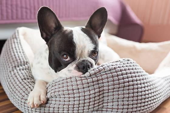 Odblešit je nutné i psí pelíšek. Případně i naši postel...