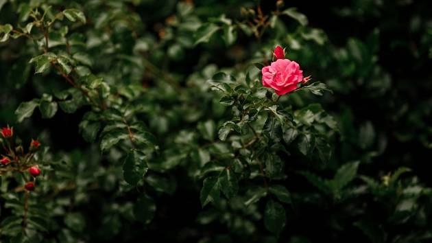Proč vaše rostliny nekvetou? Důvodů může být víc.