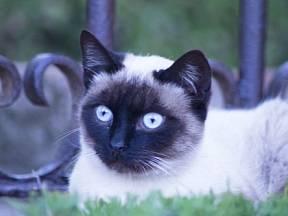 """Kočka je nejspokojenější, když jí její """"páníček"""" ve všem rozumí."""