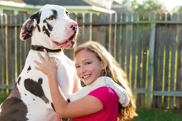 Německá doga - vysoký, statný pes, který poskytne oporu psychickou i fyzickou.