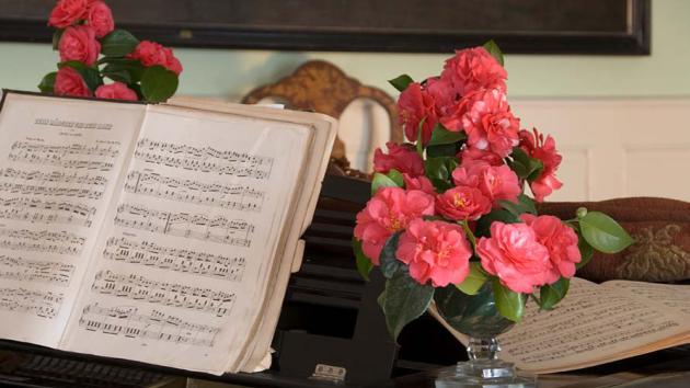 Květy kamélií se mimořádné oblibě těšily v 19. století nejen ve Francii, ale také v Rusku.