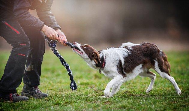 U psů existují dva základní druhy inteligence: Instinktivní a adoptivní.