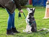 """Povely """"Zůstaň!"""" a """"Na místo!"""" by si pes neměl spojovat jen s vaším odchodem z domova."""