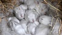 Samice připraví svým potomkům teplé a měkké hnízdo z podestýlky i vlastní srsti