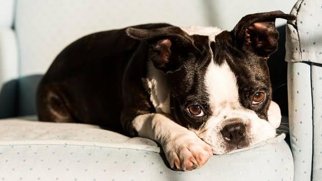 Všichni psi jsou roztomilí, ale někteří jsou opravdu velmi rozkošní.