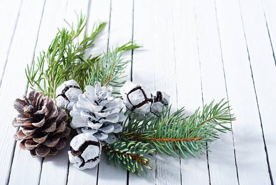 K výrobě vánočních dekorací se hodí šišky různých dřevin.