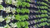 Stěna plná rostlin