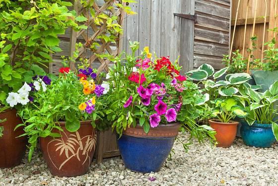 V nádobách lze pěstovat sezónní petúnie a vytrvalé bohyšky