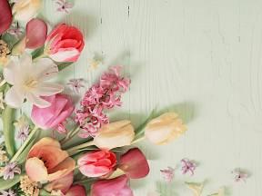Tulipány i další cibuloviny je potřeba vysadit právě teď!