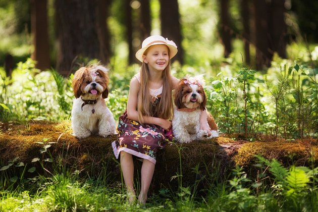 Shih-tzu je ideální rodinný pes - nebývá totiž fixován pouze na jednoho člověka, ale celou smečku.