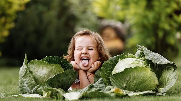 Pěstování zelí je hračka