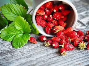 Čerstvé lesní jahody.