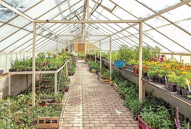 Sazeničky se ve skleníku mají jako v bavlnce