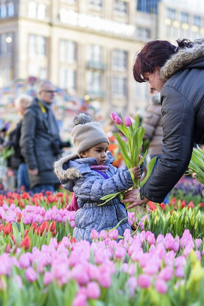 Každý si může vybrat několik tulipánů a zdarma si je odnést.