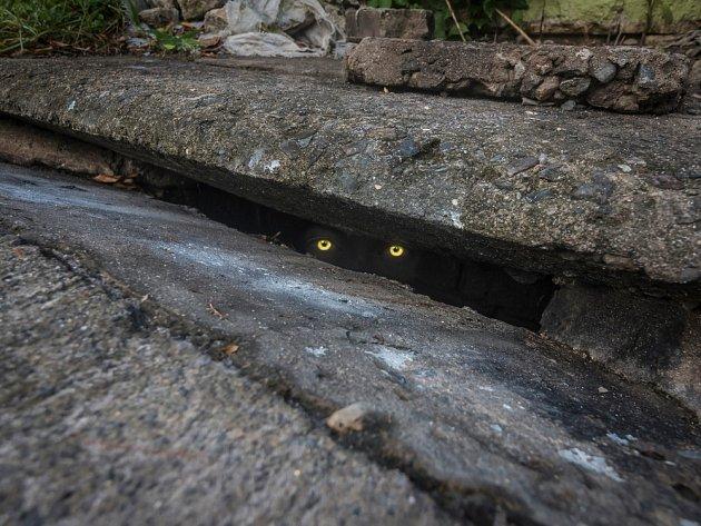 Tapetum lucidum způsobuje efekt kočičích očí zářících ve tmě.