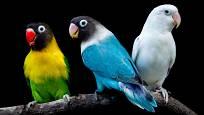 Papoušíci hrají všemi barvami