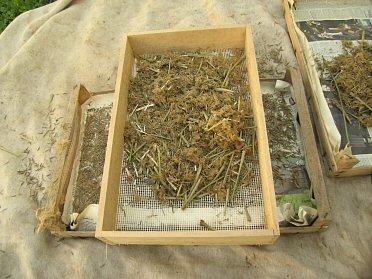 Jednoduchá síta na čistění semen