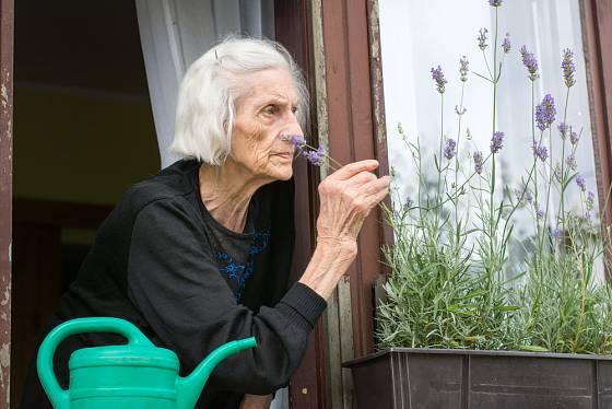 Čichání k levanduli napomáhá k dlouhověkosti