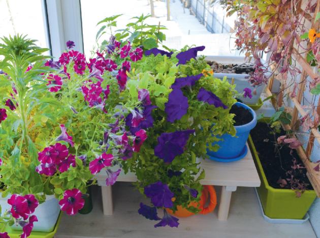 Květiny, které máme přes léto na balkoně