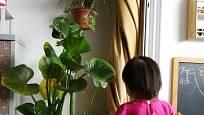 Je třeba dávat pozor, aby děti rostliny nekonzumovaly.