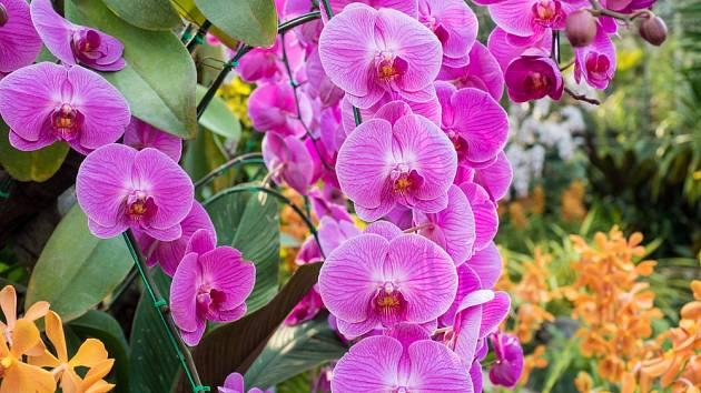 Orchidej nám rozsvítí domov.