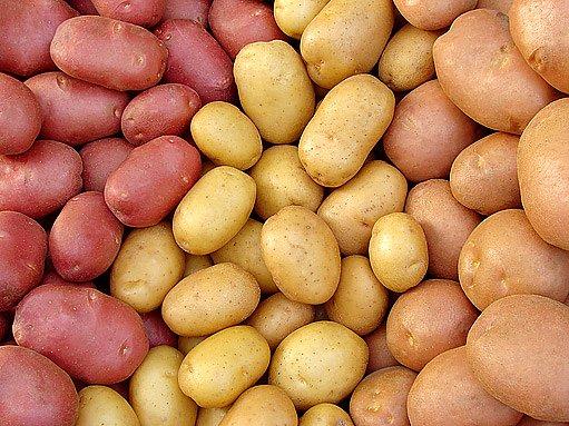 brambory se slupkou různých barev