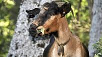 I kozy ocení jarní kvítí