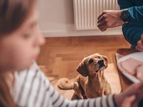 Krmení psů od stolu je především lidská neřest