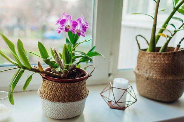 Nejvhodnější umístění pro orchidej je okno na východ nebo západ.