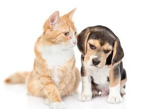 I psi a kočky mohou trpět artritidou. Víte, jak to poznáte?