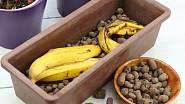 Banánové slupky poslouží jako hnojivo i při pěstování rostlin v nádobách.
