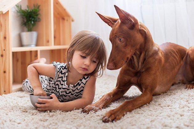 Faraonský pes potřebuje nejen dostatek péče, ale také pohybu.