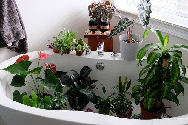 Sprchování je vhodné pouze pro některé druhy pokojových rostlin.