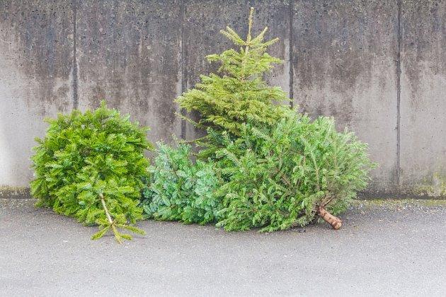 vánoční stromky končí u popelnic