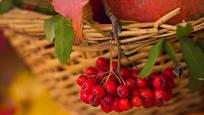 Jeřabiny prospívají zdraví