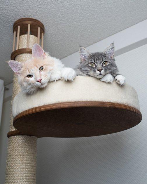Škrabadla, kočičí stromy, prolézačky, tunely a další úkryty, to vše kočky zkrátka milují.