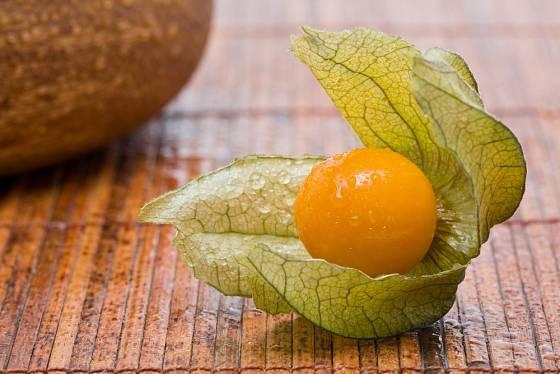 Plod mochyně peruánské chrání kalich.