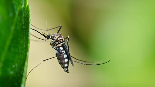 Komáři nás pojídají podle krevních skupin!