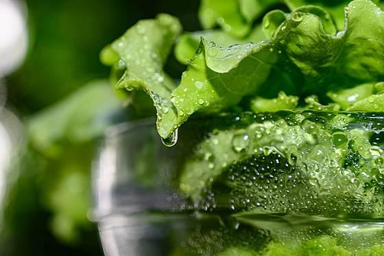 Povadlému salátu prospěje vodní lázeň.