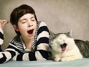 Kočka vás nenechá vyspat? Zkuste pár triků.