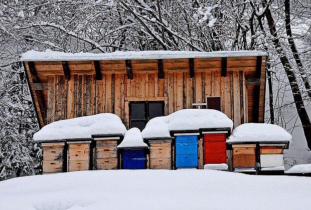 Když krajinu pokryje sníh, žijí včely ze zásob