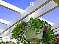 Květiny - výzdoba terasy