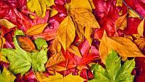 Podzimní listy nabízejí pestrou paletu barev.