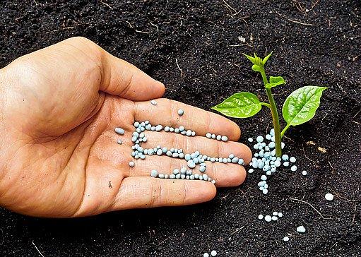 minerální hnojiva mohou zatěžovat půdu