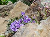 V každé skalce má převažovat kámen nad rostlinstvem.