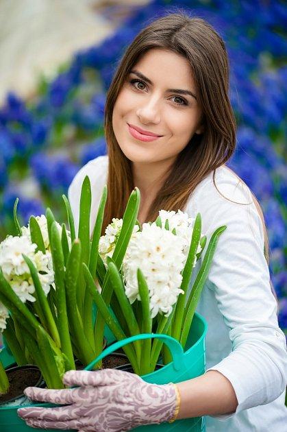 Hyacinty lze vybrat ze spousty barev, jejich květy zdobí nejen naše domácnosti, ale i zahrady.
